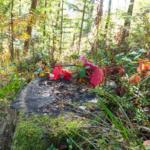 Wandern im Schwarzwald - Mitten im Wald