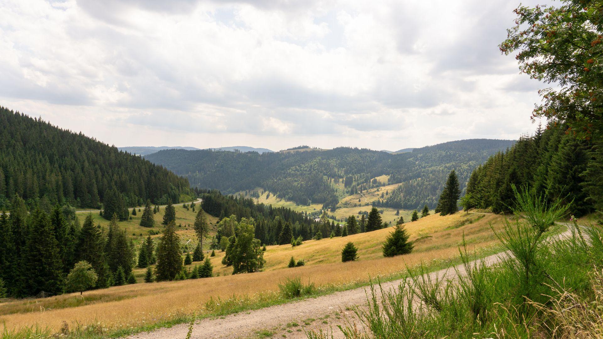 Waldspaziergang Reistraum